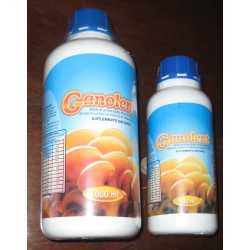 GANOLENT (Ganoderma) X 500 ml HERBA-PLANT